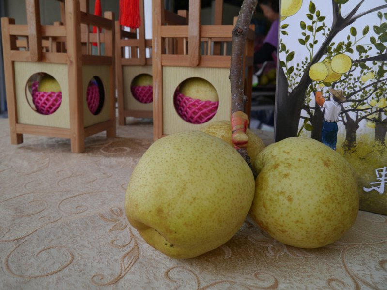 果艷梨主打口感獨特香甜,將銷往五星級飯店使用。圖/壽豐鄉農會提供