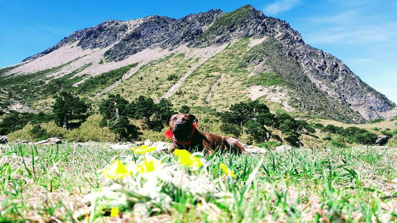 流浪犬「小花花」出現在南湖圈谷,高山協作、山友串連,努力嘗試將牠帶下山,溫馨人狗情感動不少人。圖/民眾提供