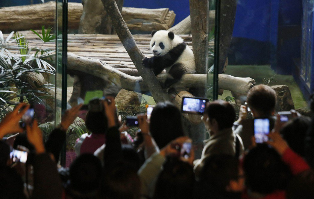 野生動物咖啡廳的本質和動物園「可愛動物區」相似。 圖/美聯社