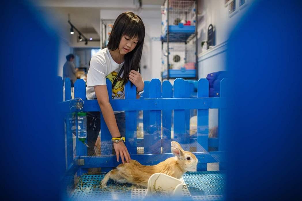 這樣的生命教育,究竟是讓我們更接近動物,還是離動物、生命的真相更遠? 圖/法新社