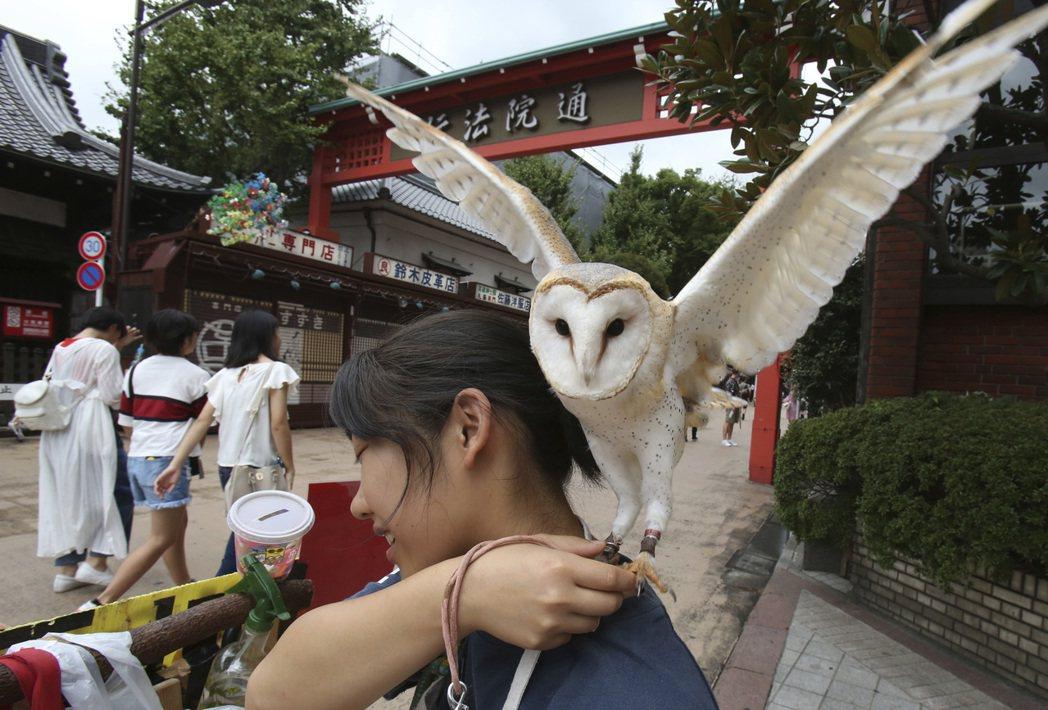日本業者以貓頭鷹吸引客人。 圖/美聯社