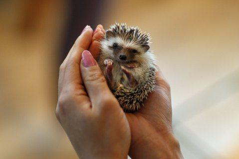 動物咖啡廳的療癒假象:寵物是家人,還是可取代的物品?