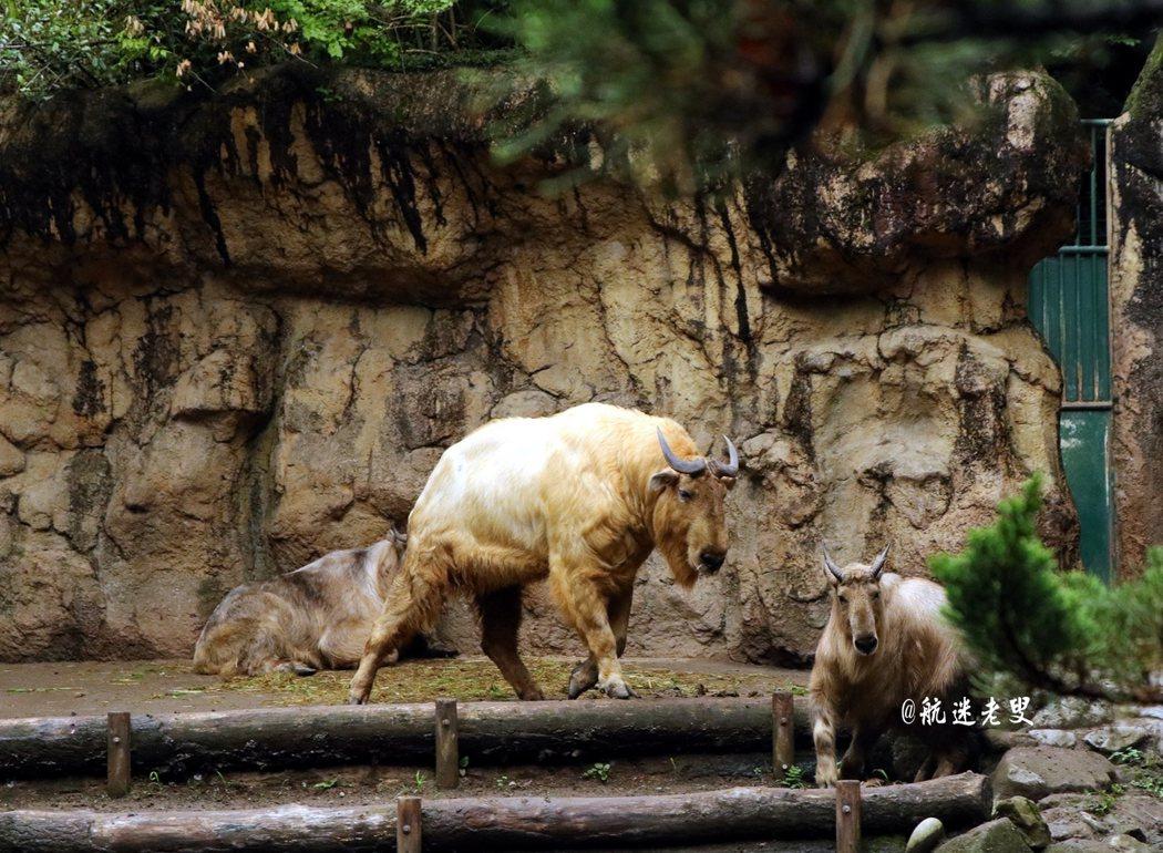 以天然的屏障代替柵欄,動物也有一個自然的生活環境, 動物自由自在的生活,和遊客面對面的相處。