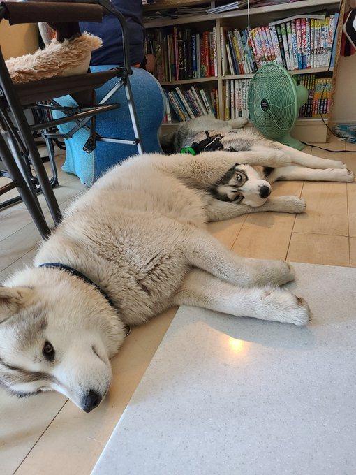 網友分享兩隻狗的睡姿,其中一隻的臉頰被另一隻夾住。圖/Twitter