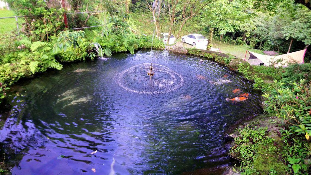 ↑這座池子較大,金魚悠游。後方的帳棚是搭在B區的。