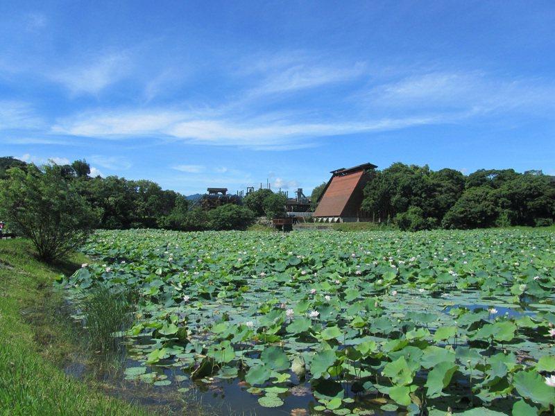 台中市東勢區的林業文化園區,腹地廣大,5公頃的荷花生態池,每年夏季吸引許多賞花遊客。圖/東勢林管處提供