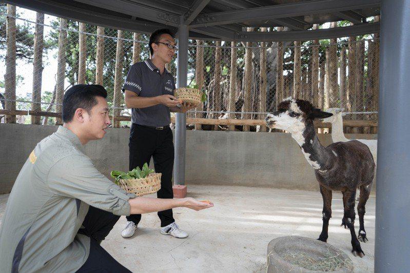 新竹市長林智堅今化身飼養員前往「咖啡」與「牛奶」新家探視,餵食紅蘿蔔、青江菜等點心。圖/新竹市政府提供