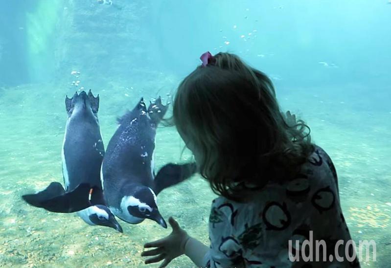 台灣八景島Xpark水族館規畫曝光的近距接觸欣賞企鵝(見圖)各種嬉戲可愛姿態。圖/翻攝Xpark官網