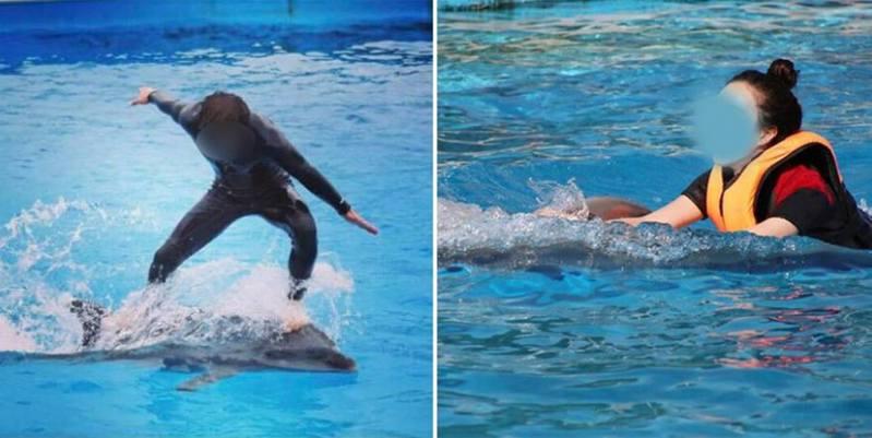 巨濟市一間海洋樂園被指虐待海豚和白鯨,園方推出VIP「騎海豚」活動,訓練員表演時亦踩在動物身上跳舞,引起動保團體和部分民眾不滿。(網上圖片)