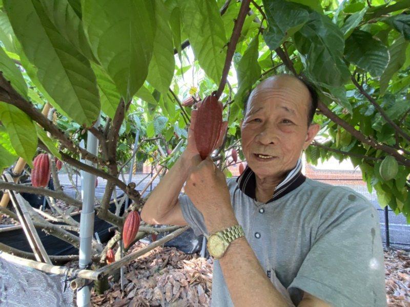 陳哲雄熱心推廣可可亞樹的栽培,希望這項高經濟作物,吸引年輕人返鄉務農。 圖/江良...