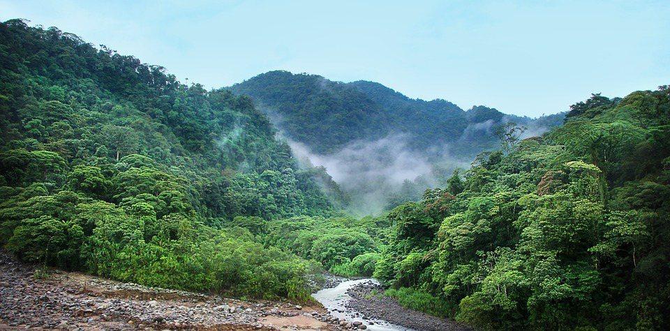 研究人員表示,去年全球3塊大陸有大片原始雨林遭到焚毀,,平均每6秒就有1個足球場...