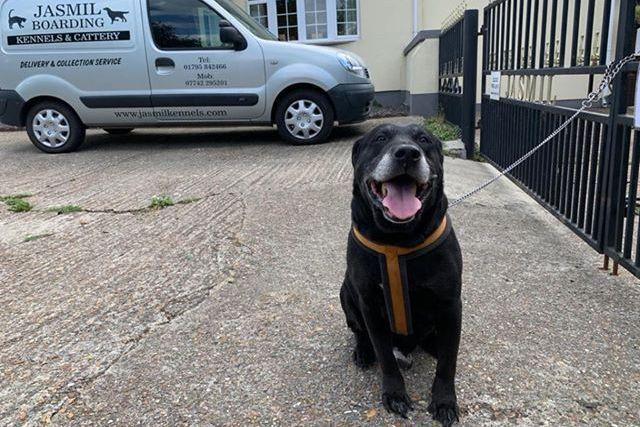 拉布拉多犬在賈斯米收容所外。 圖 / Swale Borough Council Stray Dog Service