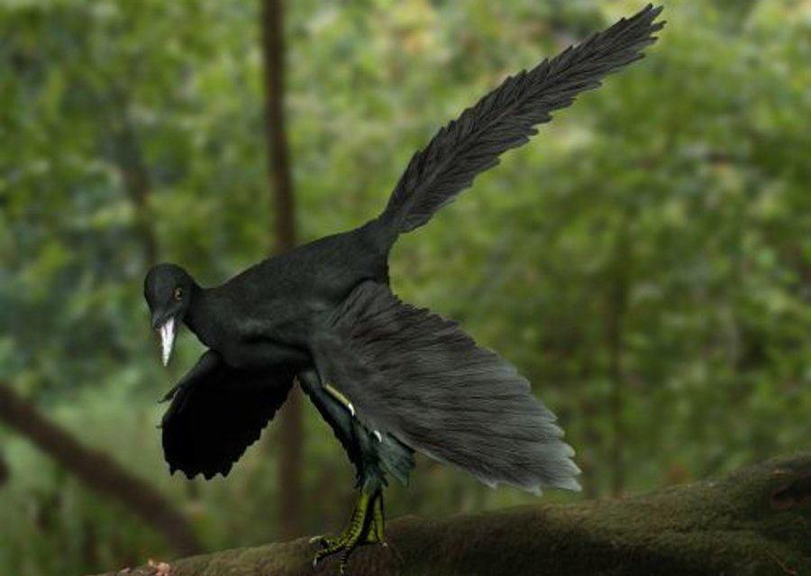 始祖鳥的復原圖。 圖/取自維基共享(©Nobu Tamura)