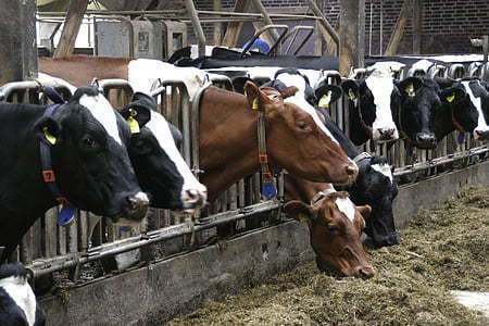 聯合國報告警告,如果人類不能減緩環境開發,並積極保育動物,未來只會因為人畜共通病而有更多損害。(Photo on UIhere)