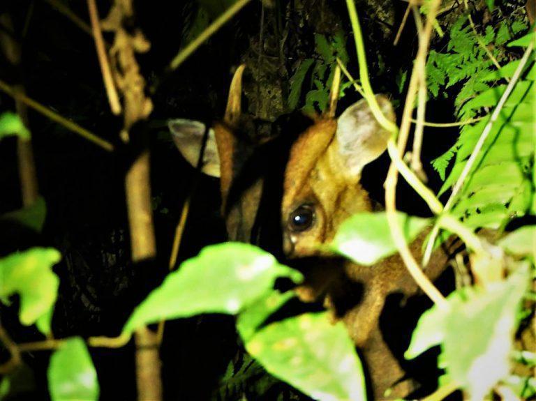 ▲夏日夜間活動體驗-林間探索。(圖/Tripbaa趣吧!達人帶路)