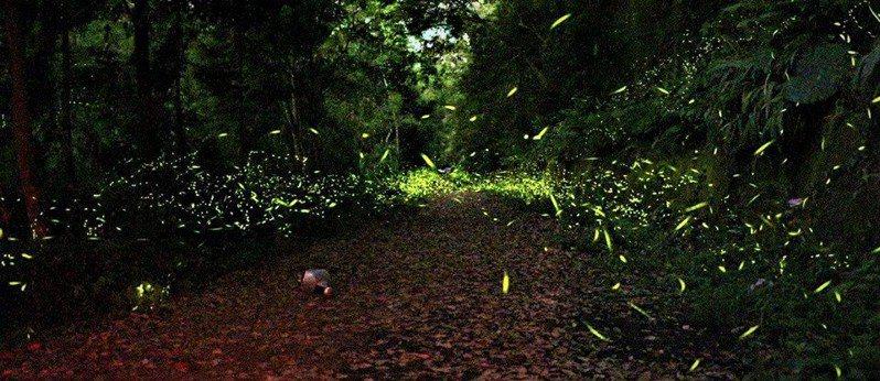 ▲夏日夜間活動體驗-坪林賞螢火蟲。(圖/Tripbaa趣吧!達人帶路)