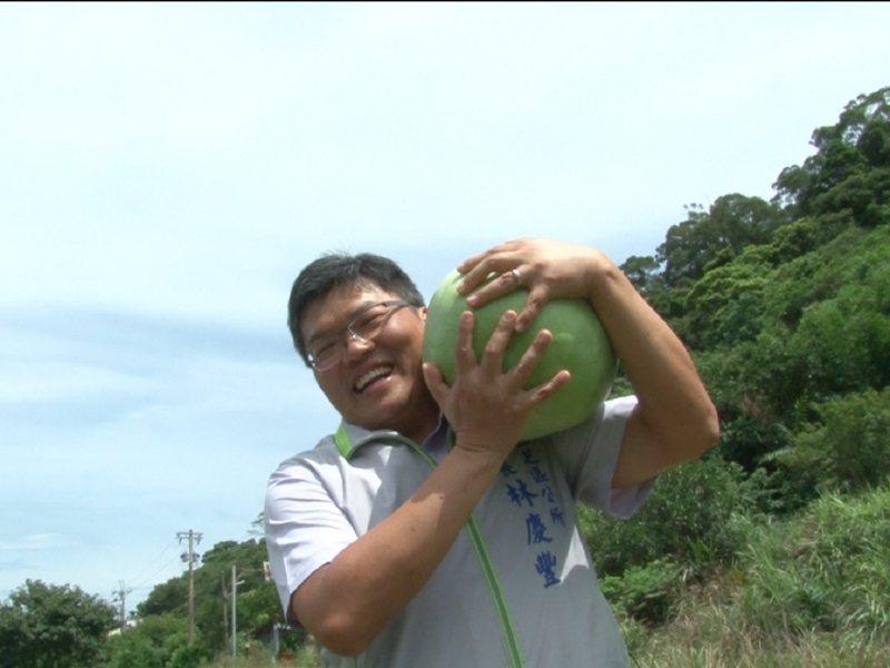三芝區長林慶豐前來進行一日農夫的挑戰,下田採收30斤大西瓜,歡迎大家來品嚐三芝西瓜沁涼的好滋味。 圖/紅樹林有線電視提供