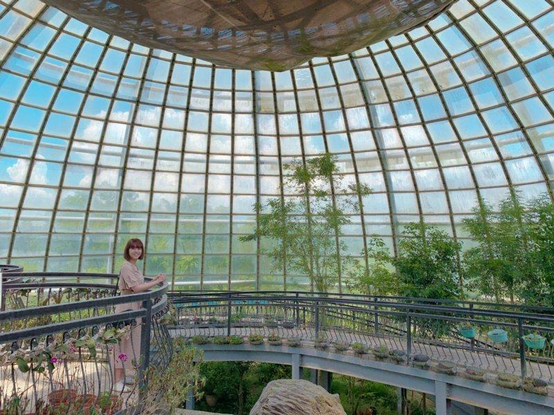 嘉義大學昆蟲館可讓網美拍照體驗生態之美。 圖/李承穎 攝影