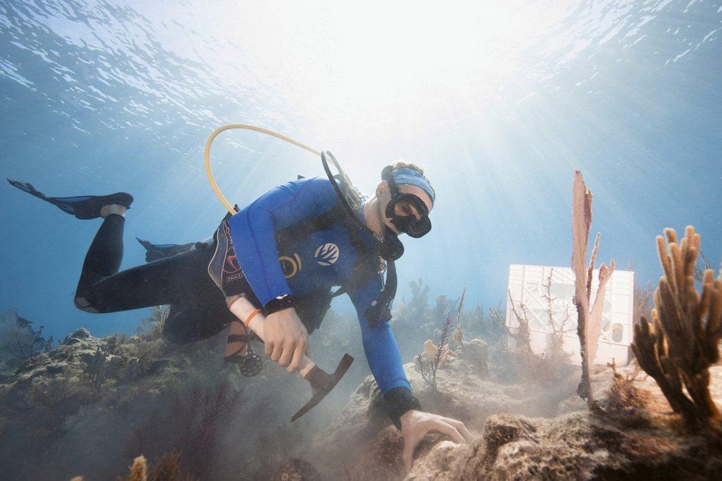 Carysfort Reef 復育計畫。業者/提供