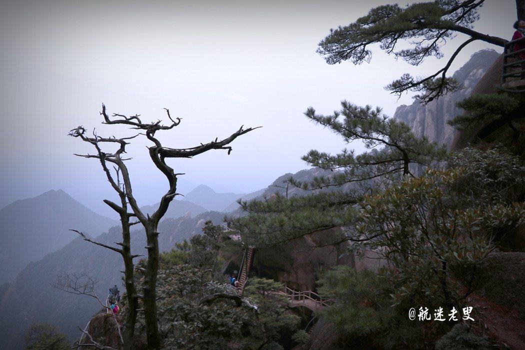 松柏遺世傲立,被風雕琢的不羈造型形成一個個巨大的盆景,也讓三清的山峰平添了些許靈氣。