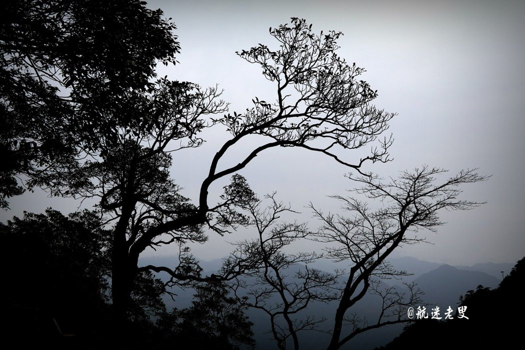 變幻莫測的雲山霧海在造型奇特的峰林間翻騰,雲霧使千山萬壑濃淡明滅、變幻莫測,置身其間,宛如仙境。