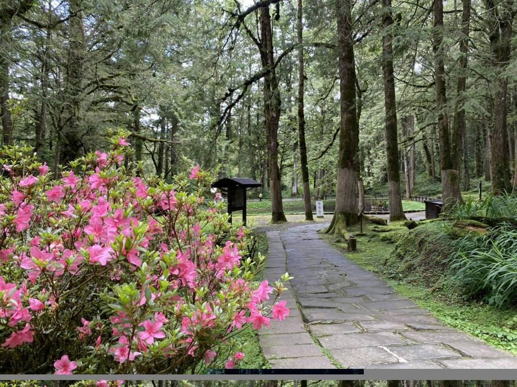 15日起到阿里山國家森林遊樂區,可享免費入園。圖/嘉義林區管理處提供