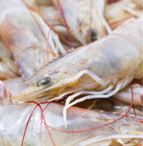 廈門海關從進口冷凍南美白蝦外包裝檢出新冠病毒。(廈門廣電微信公眾號)