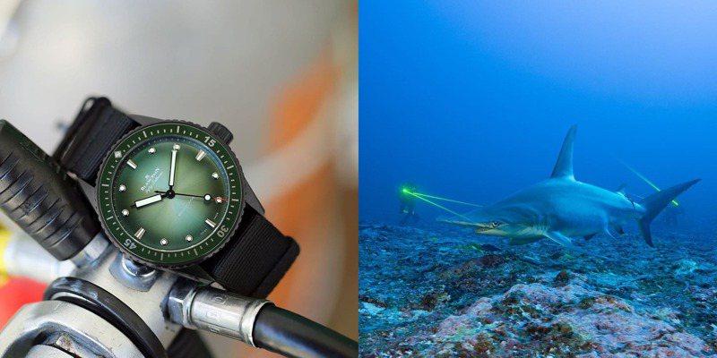 寶珀特殊版本的Bathyscaphe Mokarran限量腕表,選擇支持Mokarran Protection Society的鯊魚保育工作。圖 / 翻攝自 ig。