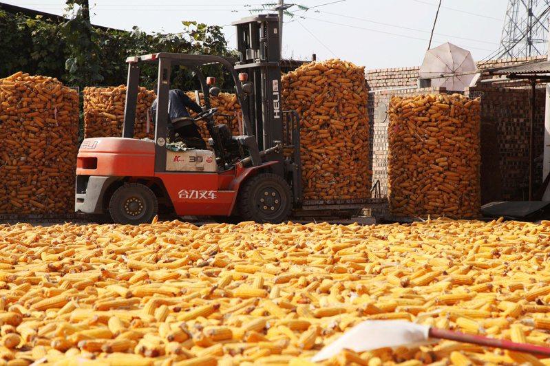 最新數據顯示,大陸單日採購美國玉米的數量為1994年來最高,並締造歷史第二高的紀錄。路透