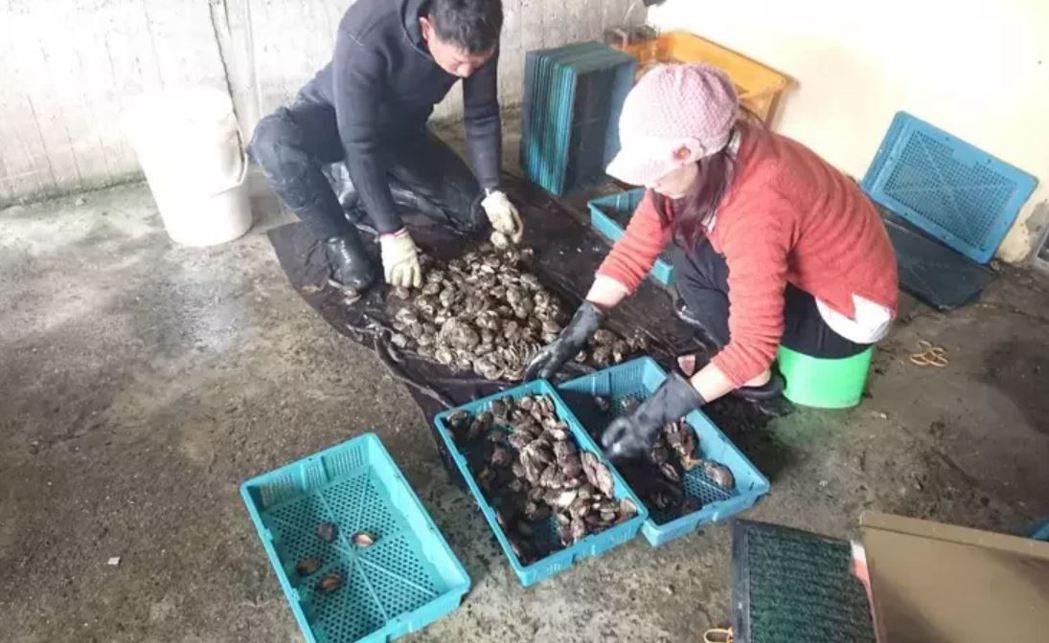 新北市貢寮區漁會與中國大陸業者簽具採購意向書,但因對岸受疫情衝擊,未來台採購。圖...