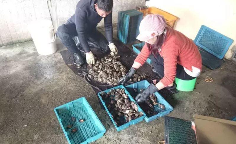 新北市貢寮區漁會與中國大陸業者簽具採購意向書,但因對岸受疫情衝擊,未來台採購。圖/新北市漁管處提供