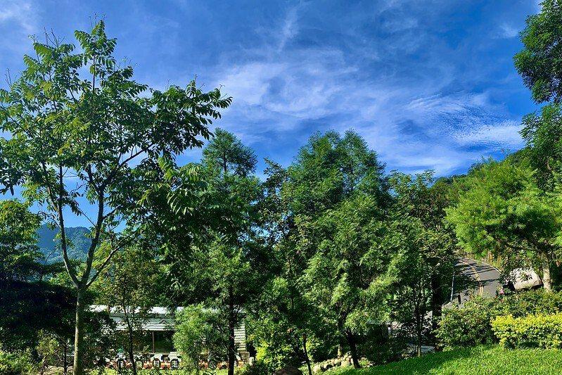 入口的橄欖樹