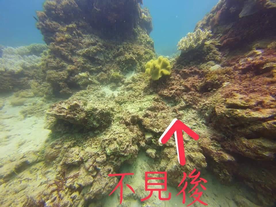 潛水同好拍下巨大硨磲貝失蹤後的照片。圖/讀者提供