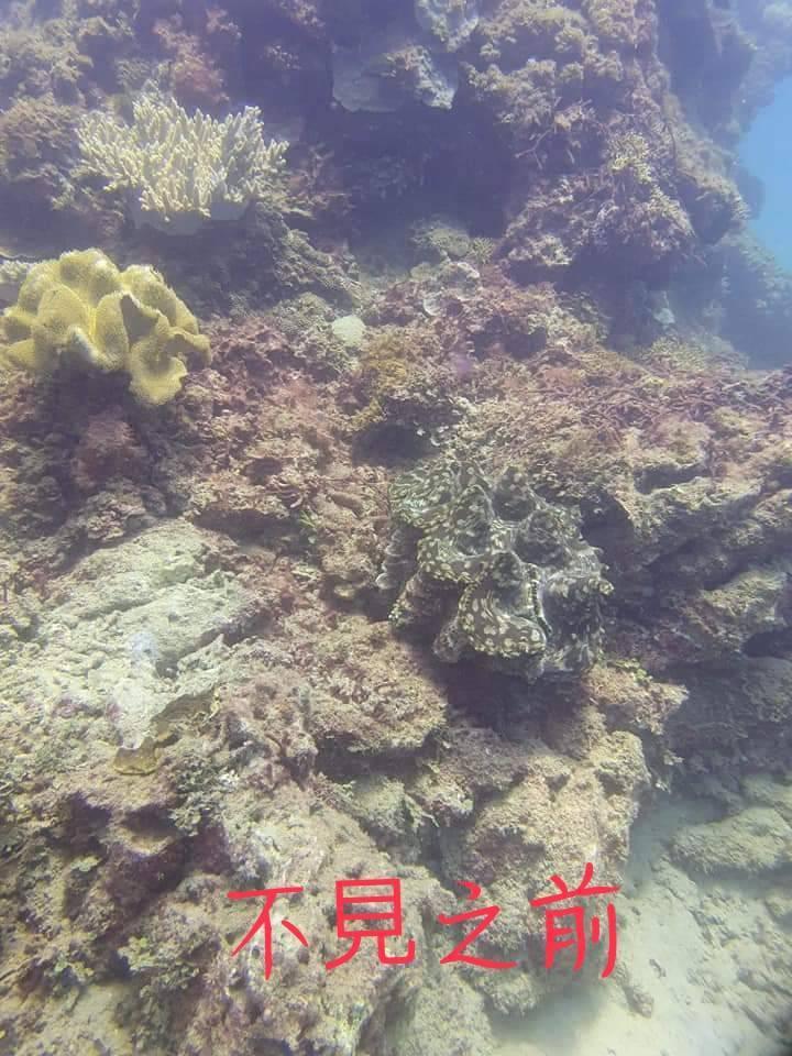 潛水同好拍下巨大硨磲貝失蹤前的照片。圖/讀者提供