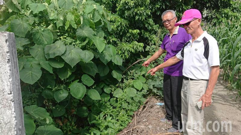彰化縣北斗鎮的農田灌溉溝長滿雜草,嚴重淤積。記者簡慧珍/攝影