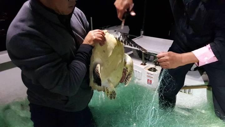 4年前,基隆市府科長蔡馥嚀、潛水教練王銘祥和漁會總幹事陳文欽3人,搭船摸黑去收遭廢棄的漁網,漁網裡卡了一隻海龜,拉上來已氣絕。圖/蔡馥嚀提供