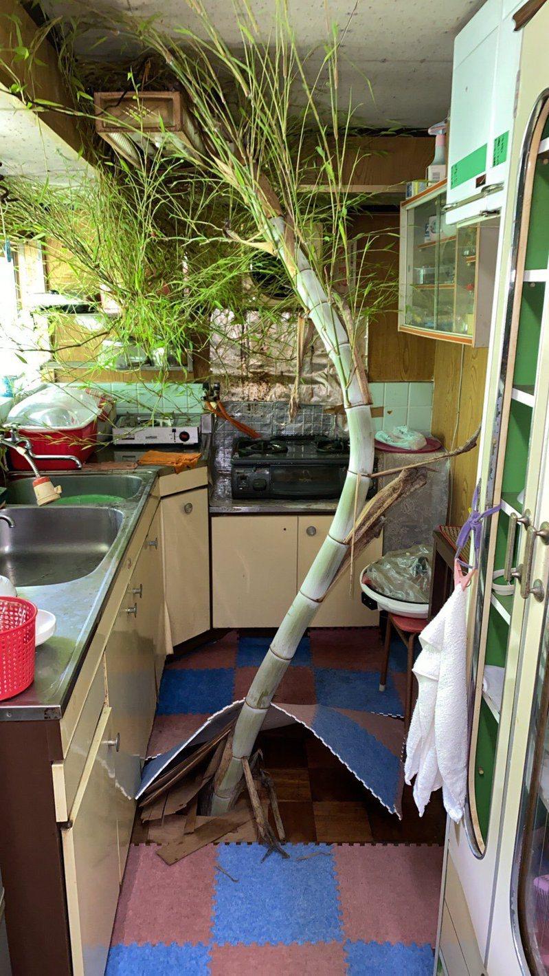 網友回到沒人住的祖父母老家,發現廚房裡竟然長了一棵竹子。圖/Twitter