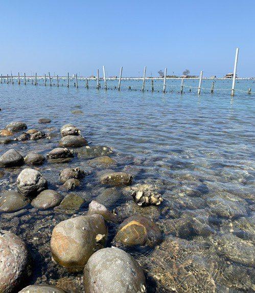 白水湖蚵學家的蚵田在潮間帶,不是浮棚而是立棚,每日有潮汐漲退,蚵仔長得慢,但肉質緊實。圖/蔡珠兒提供