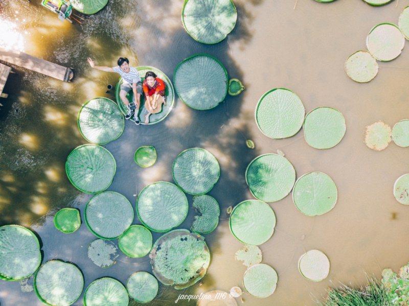 觀音蓮花園休閒農業區內不少農場在蓮池或蓮田旁,打造池中鞦韆、涼亭等特殊造景,蓮荷...