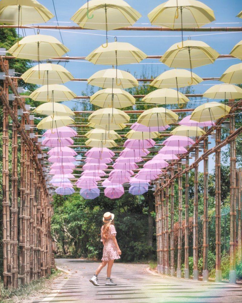桃園市工務局今年也在蓮花季主會場旁公埤,打造長達95公尺的「擎雨步道」,一支支粉...