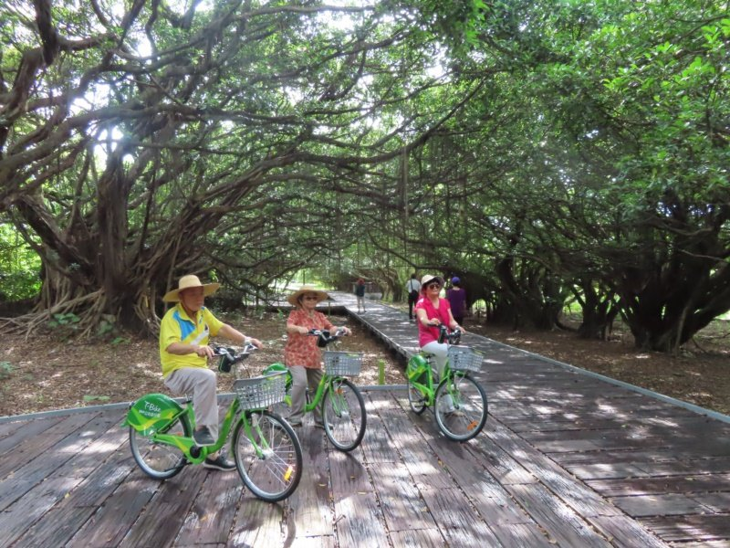 台南新營建構完整自行車道,沿途常有大片綠蔭,適合銀髮族朋友結伴騎行。 圖/新營區...