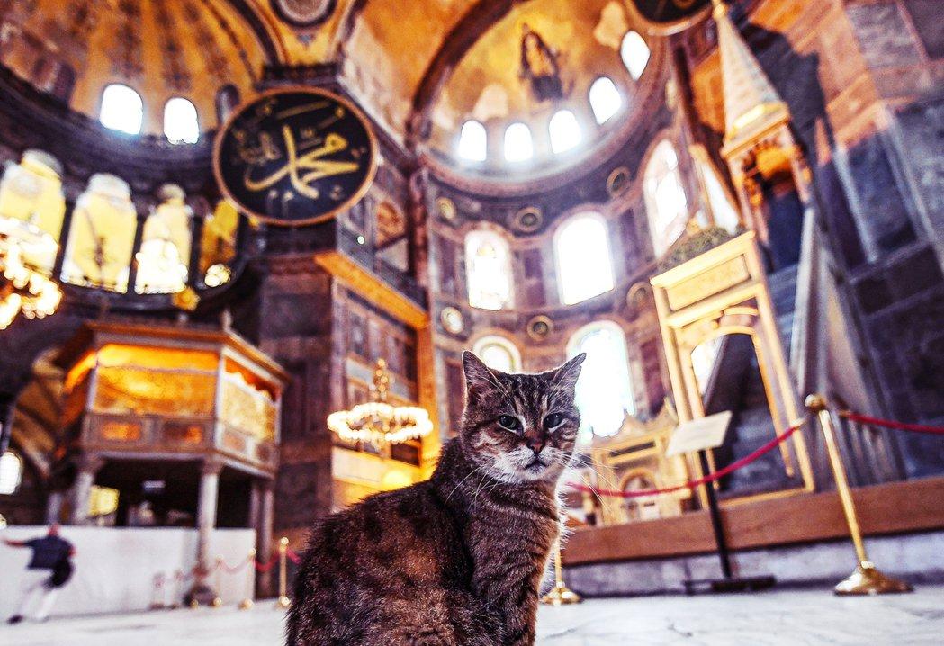 聖索菲亞大教堂的「守護者」Gil,已在教堂內外逡巡守護這座歷史宗教建築,將近15...