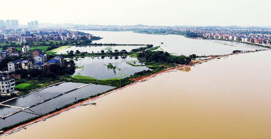 江西鄱陽縣長江流域,將淹過堤防的洪水災情。 圖/新華社