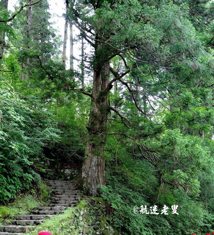 山間路旁,古樹風華, 有遺世獨立的純靜氛圍。