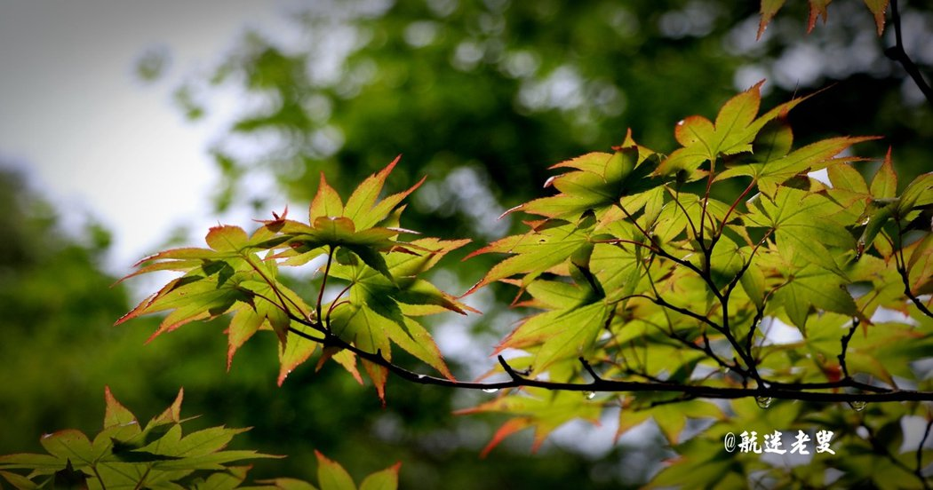 日光的楓葉看到時心中會有重莫名的興奮, 如果等到楓紅時節,壯麗的景色會令人心醉神迷。