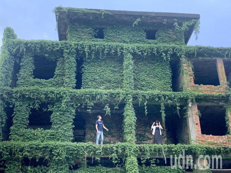 台南市新化區高爾夫球場旁的廢墟建築,因爬滿蔓藤植物,被為稱為「綠巨人浩克的家」,成為爆紅景點,每年都有來自全台各地民眾前來拍照。記者吳淑玲/攝影