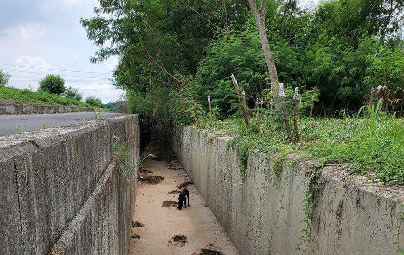 黑狗掉落大排,受困超過一周,瘦成皮包骨。圖/台灣動物緊急救援小組提供
