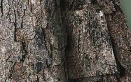 設計師顏伯駿特別樹皮、葉脈打膜,讓學生用「摸」的學自然。 圖/美感團隊提供