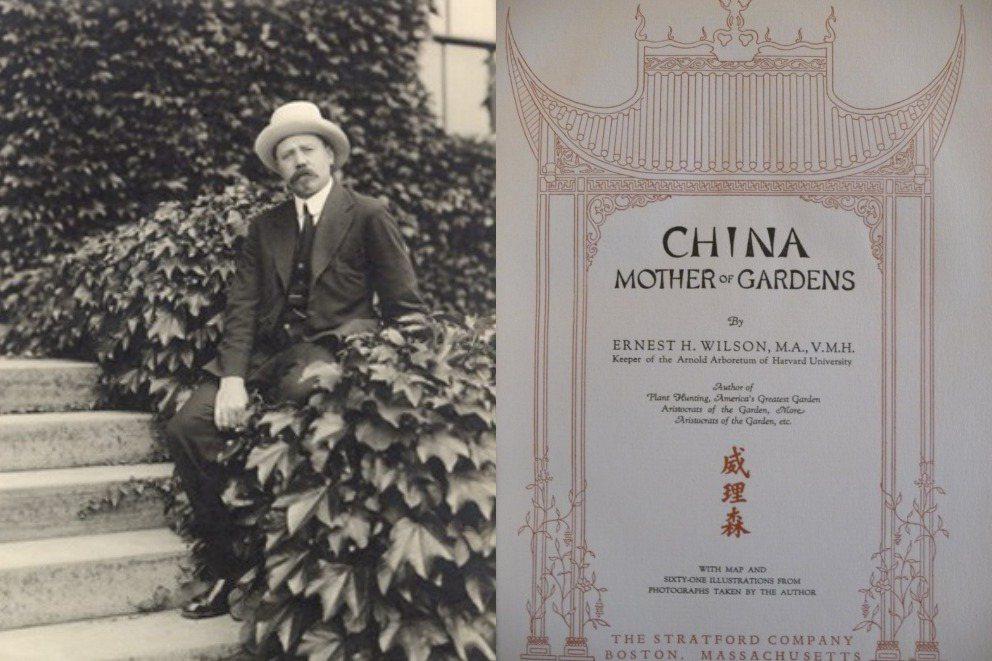 威理森1906年被哈佛大學的阿諾德植物園挖角,派往中國、日本等地尋找新物種;威理森曾出版的《China-Mother of Gardens》一書。 圖/取自Arnold Arboretum;林試所提供