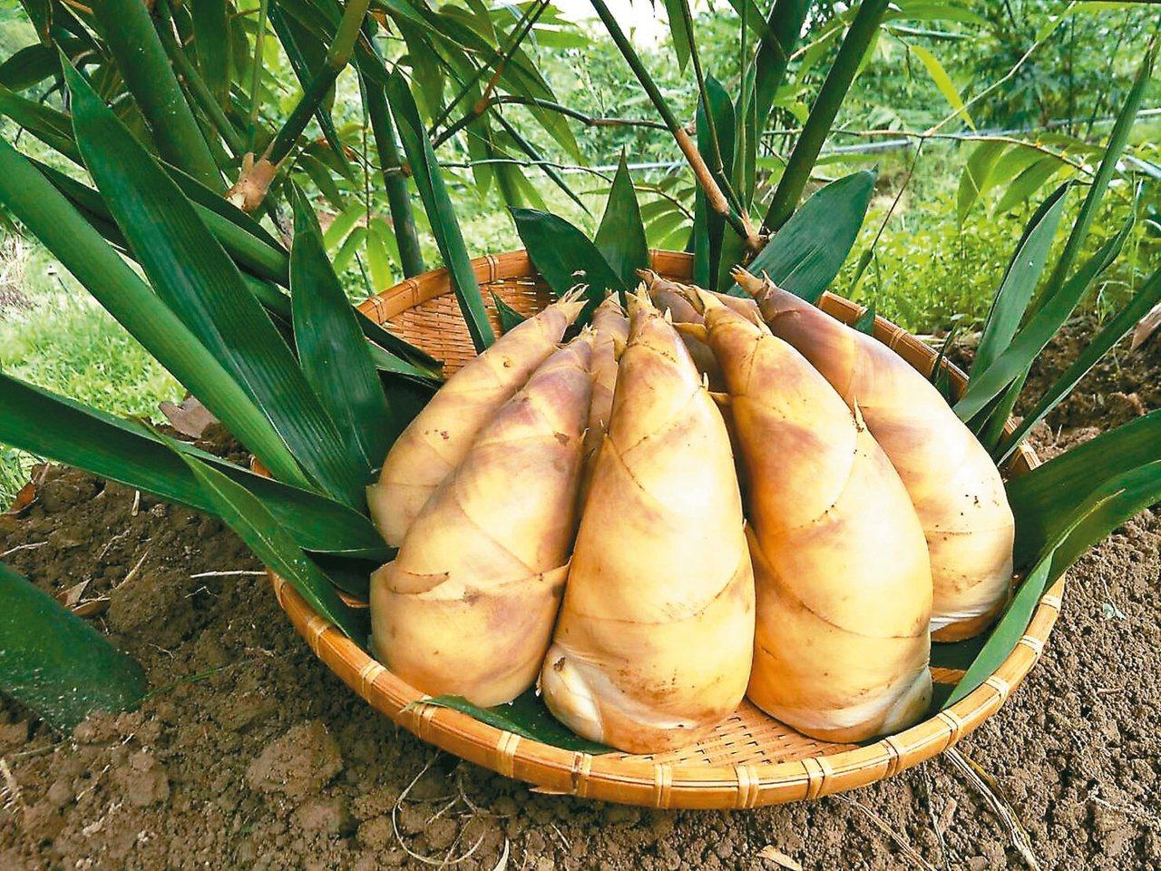 六至八月是綠竹筍盛產季節,也是最佳的品嚐時機。 圖/本報系資料照片